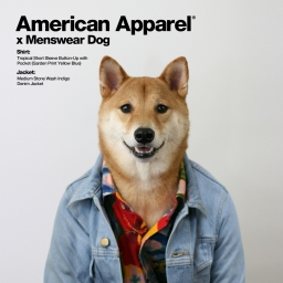 Trendy Now: American Apparel x Menswear Dog – Oh, It's a dog's life!