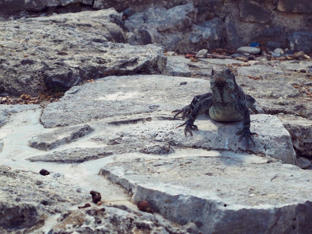 Bon Voyage: Tulum, City of Dawn
